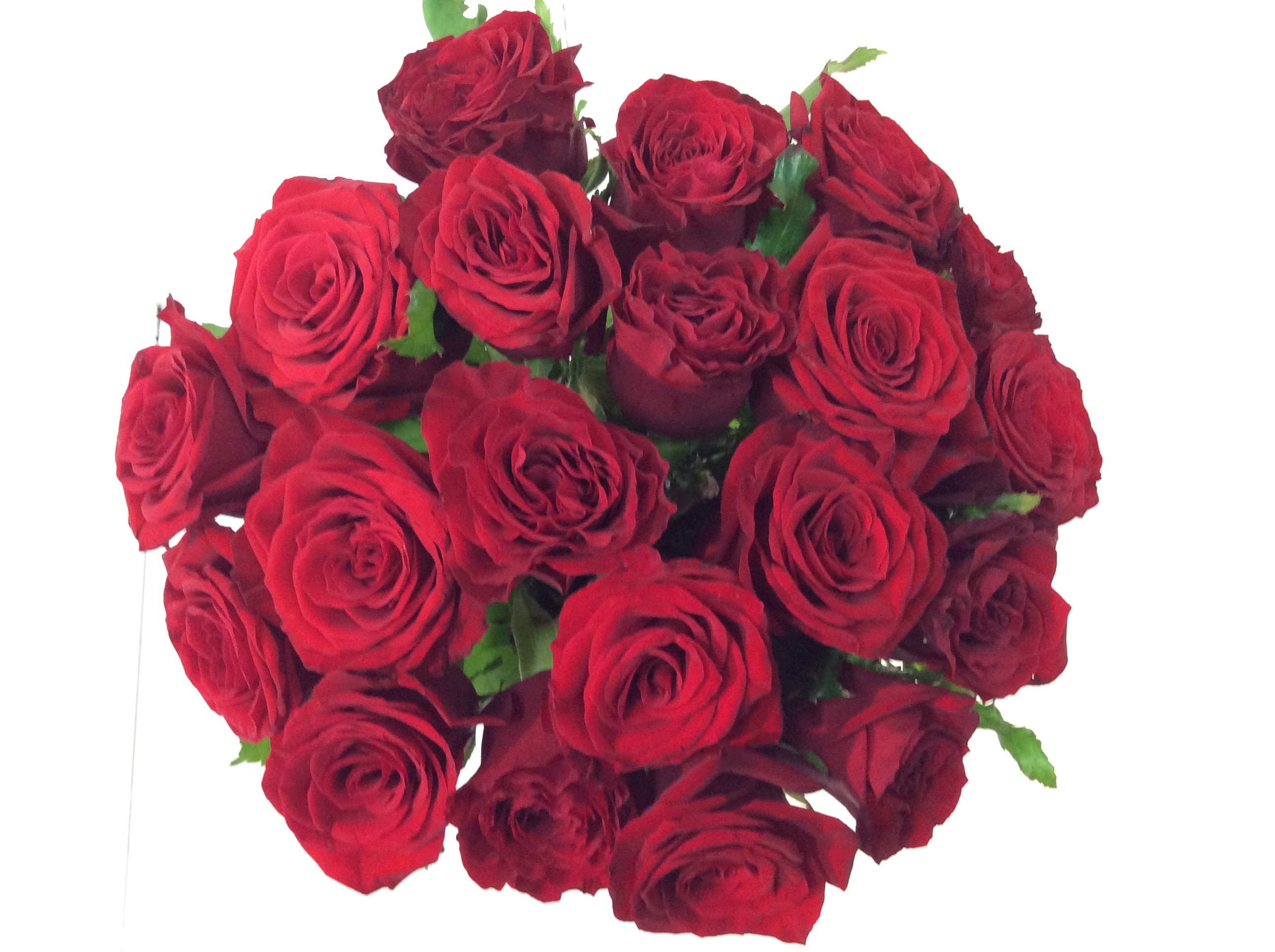 Special Request Flower Bouquet | Flower Wholesalers Auckland