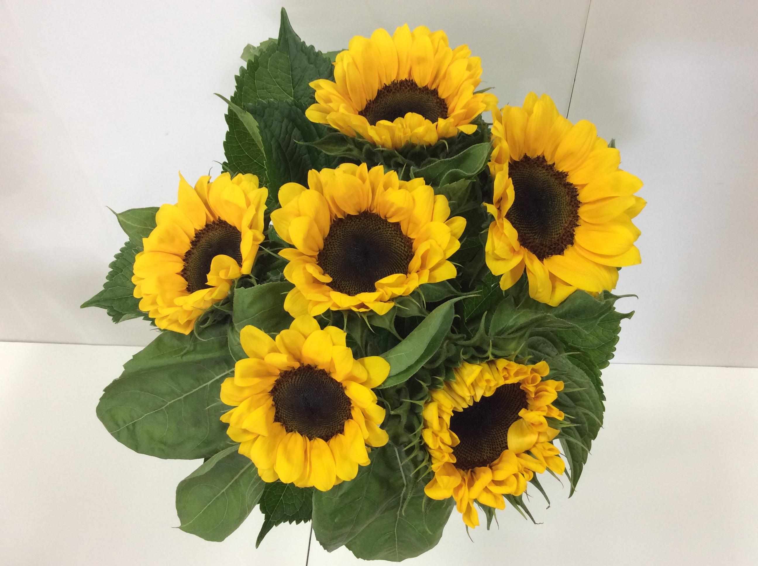 Sunflower bouquet flower wholesalers takapuna